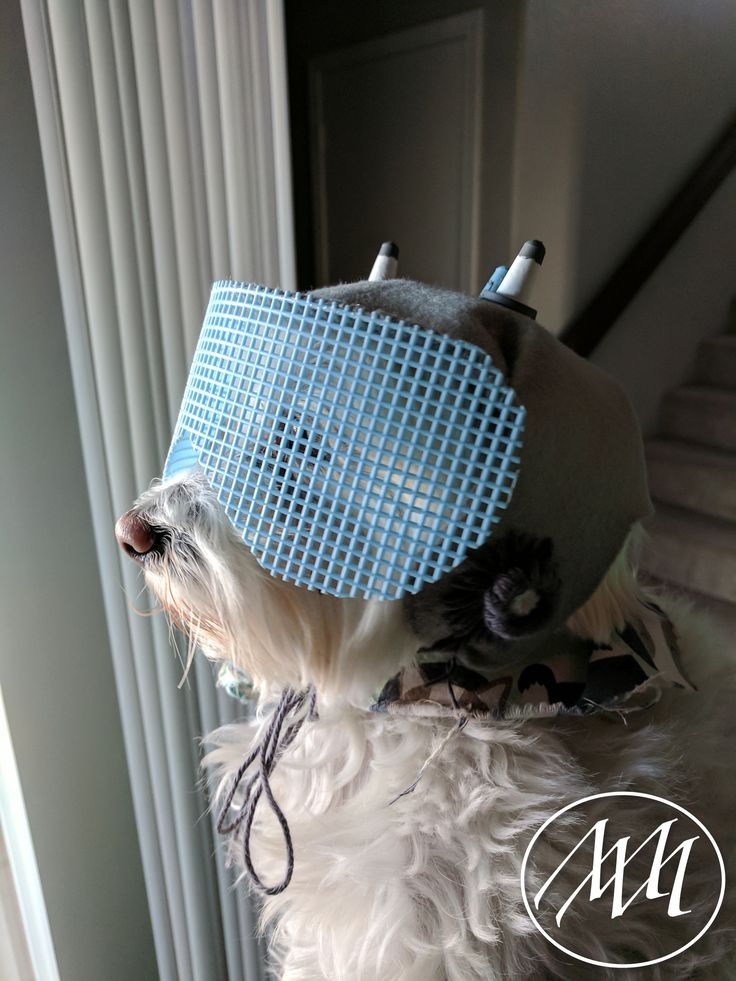 DIY Snuffles/Snowball Helmet Pet Costume | Make this adorable Snuffles/Snowball helmet from Rick and Morty for your pet! This was a perfect project for me to create because I have a Maltese dog named Ruggles! Today…he becomes Snuffles/Snowball from Rick and Morty!