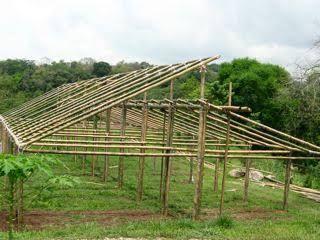 Resultado de imagem para bamboo greenhouse