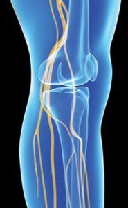 Идей на тему «femoral nerve в pinterest»: 1000+   Растяжка при, Muscles