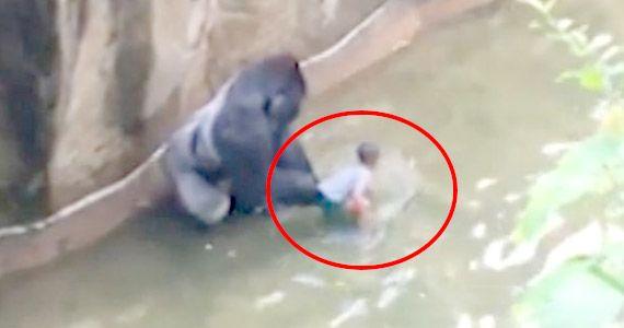 Zoológico mata gorila después que niño cae en su fosa