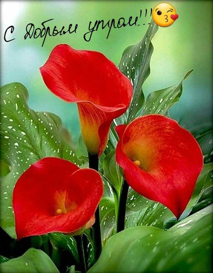 дома поздравления о семенах цветов рацион питания