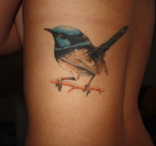 1000 images about blue wren on pinterest posts in love and bird tattoos. Black Bedroom Furniture Sets. Home Design Ideas