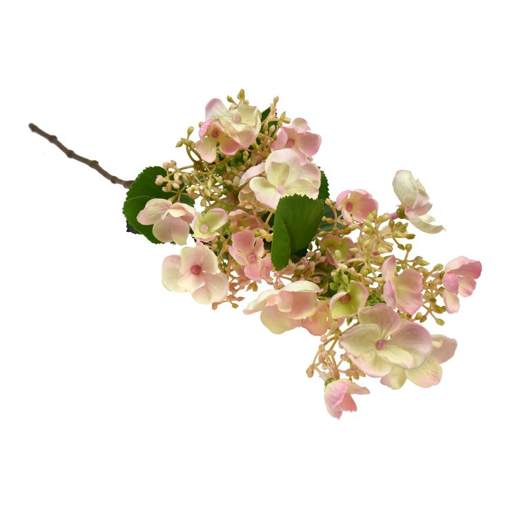 Viburnum Branch. Its pretty combination of buds and open flowers add another dimension to any arrangement. An ideal light filler that adds texture!