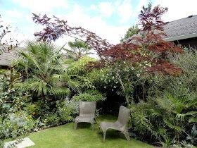 best 25 albizia julibrissin ideas on pinterest albizia tree silk tree and persian silk tree. Black Bedroom Furniture Sets. Home Design Ideas