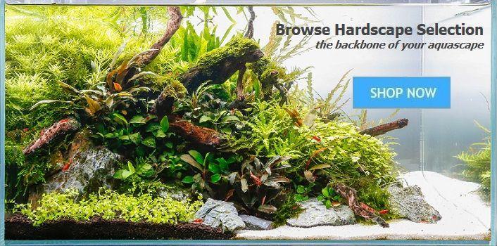 Hardscape Wood And Rocks Fresh Aquarium Garden Aquarium
