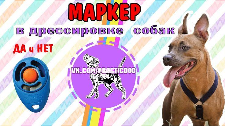 Маркеры ДА и НЕТ в дрессировке собак | дрессировка питбуля