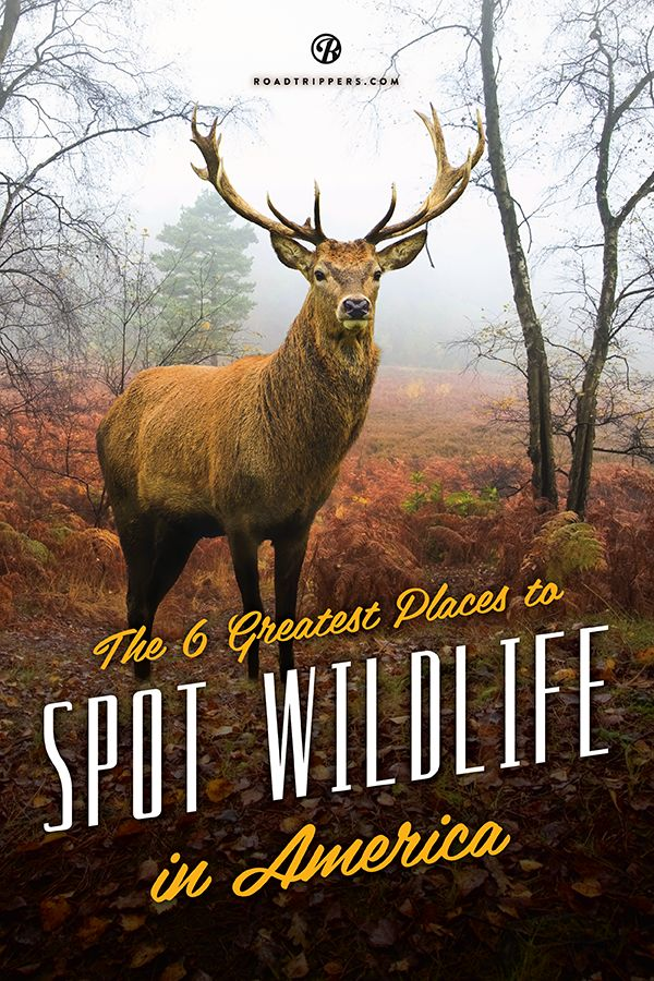 Our national parks have set aside areas that are expertly prepared to serve up amazing wildlife encounters.
