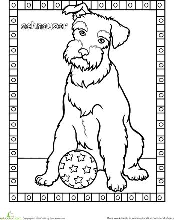 Worksheets: Schnauzer Coloring Page