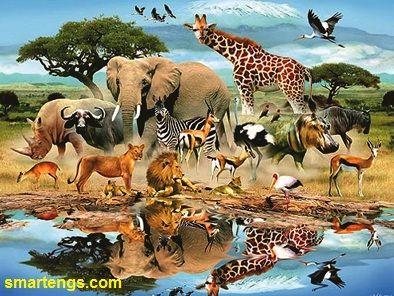 The names of different animals houses - اسماء بيوت الحيوانات المختلفة | smartengs
