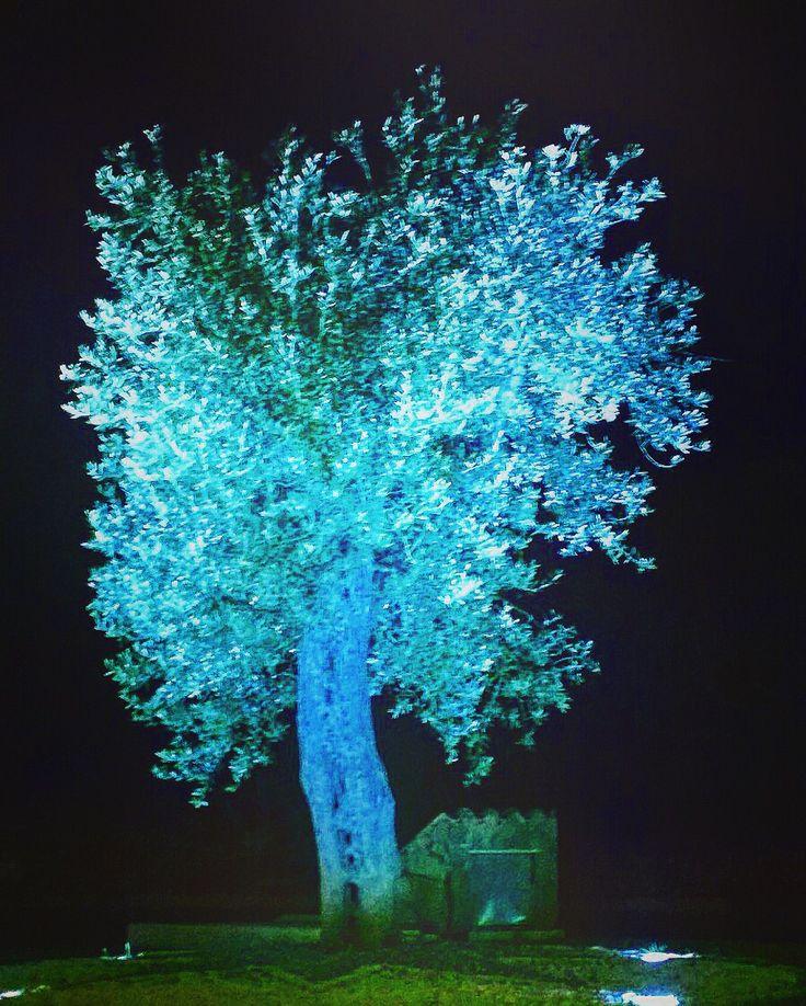 Albero azzurro
