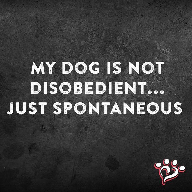 And a bit stubborn... lol
