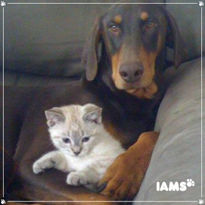 <3...Puppy & Kitty love - Zeus & Chaos, best buds - so adorable!
