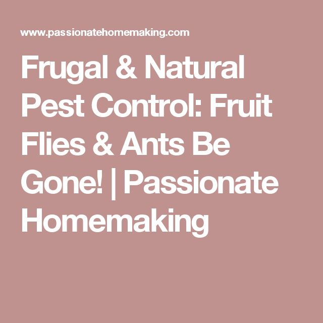 Frugal & Natural Pest Control: Fruit Flies & Ants Be Gone! | Passionate Homemaking