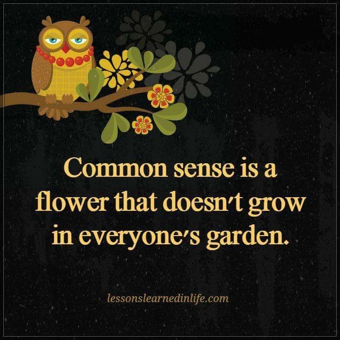 Inspirational Day Quotes: Best 25+ Common Sense Quotes Ideas On Pinterest