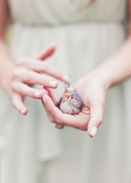 Tiny Finch