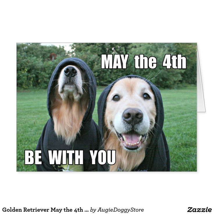 May The 4th Be With You Best: 156 Best Golden Retriever Greeting Cards & Postcards