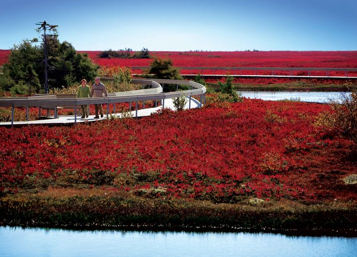 Scarlett-coloured peat bogs in the fall | Miscou Island, New Brunswick Canada