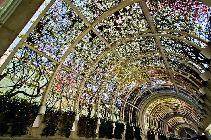 Gorgeous color and light through an arched glass ceiling: Beautiful Architecture, Gorgeous Colors, Glasses Ceilings, Trees, Arches Glasses, Photo