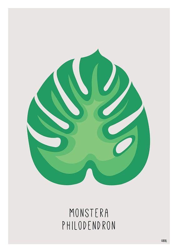 Die besten 25 philodendron monstera ideen auf pinterest monstera deliciosa k serei und - Zimmerpflanzen groay ...