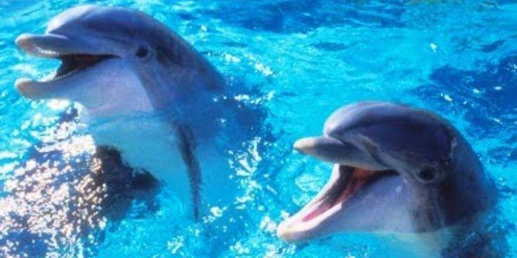 Πάτρα: Τα δελφίνια βγήκαν στον Καστελόκαμπο και έπαιξαν με τους λουόμενους