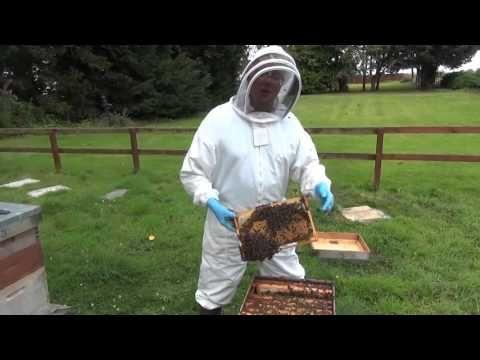 #VR #VRGames #Drone #Gaming 2  Meet the Drones (male honeybees) beekeeping in Scotland, drone bees, drone honeybees, Drone Videos, Honeybees in Scotland, SBA, Scottish Beekeepeers Association, Scottish beekeepers, Scottish honeybees, what are drones #BeekeepingInScotland #DroneBees #DroneHoneybees #DroneVideos #HoneybeesInScotland #SBA #ScottishBeekeepeersAssociation #ScottishBeekeepers #ScottishHoneybees #WhatAreDrones https://datacracy.com/2-meet-the-drones-male-honeybee