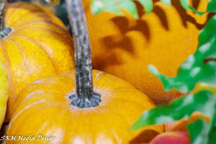 Happy Halloween! #pumpkins #scary #candy #October #31 # Witches #goblins #kids #fun #boo #scream #fall #garden #winteriscomming #SKMmediadesign
