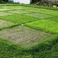 Types of Grass – Top Ten Varieties