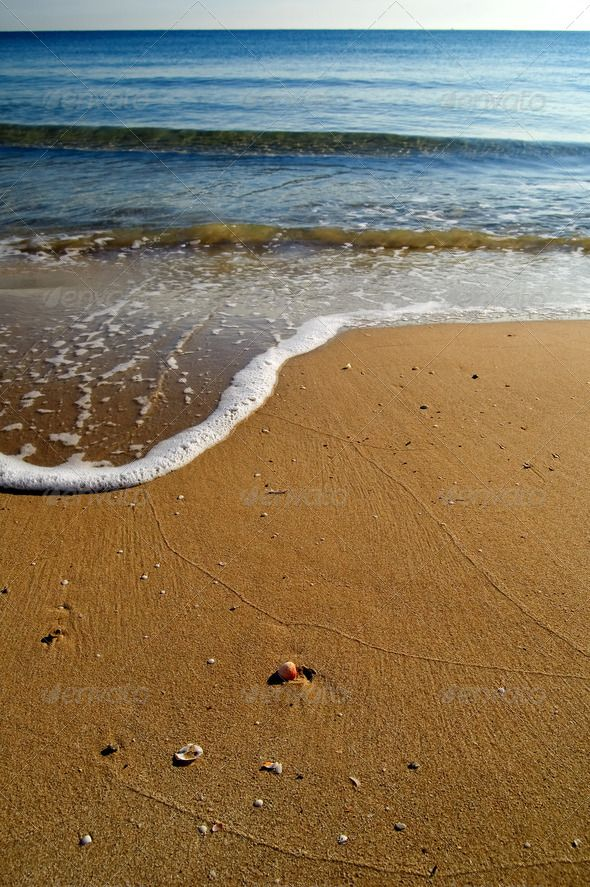 Shell and shoreline