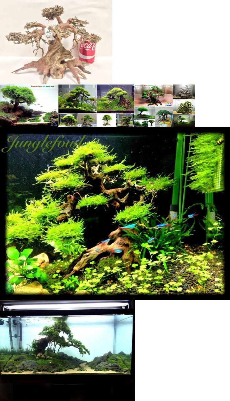 Freshwater aquarium fish boise idaho - Decorations 66789 Large Bonsai Driftwood Tree Aquarium Moss Fish Shrimp Planted Tank Aquascape Buy It Now Only 106 99 On Ebay