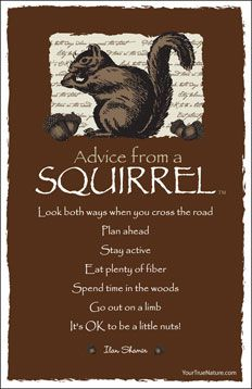 Advice from a Squirrel Frameable Art Postcard