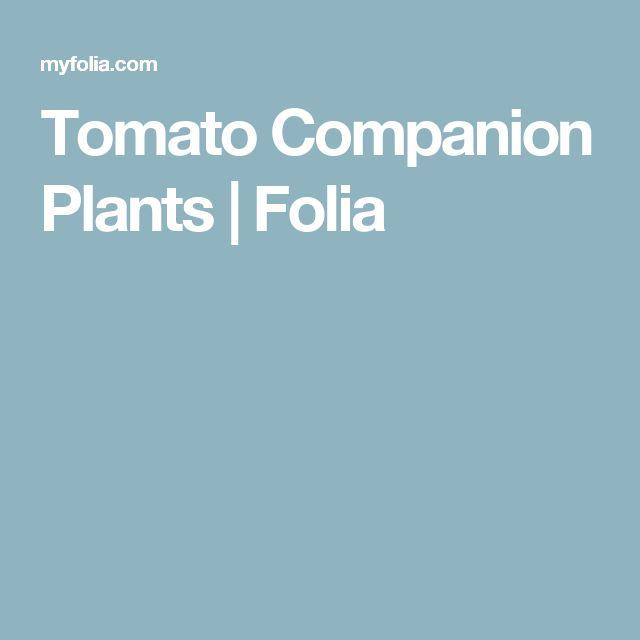 Tomato Companion Plants  | Folia