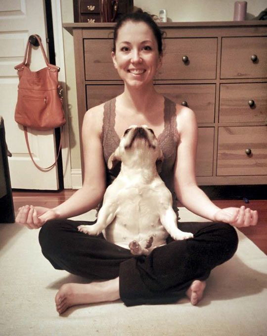 This dog loves his yoga...