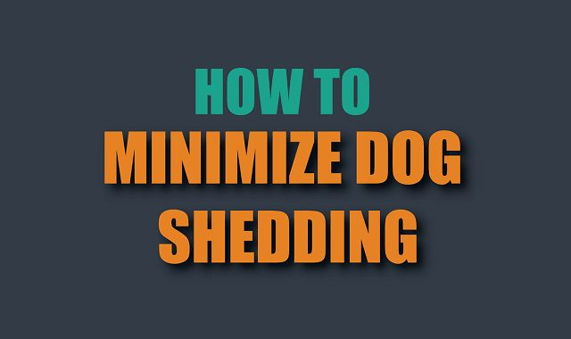 Dog shedding is a normal part of your dog's life, therefore you can't stop shedding completely, but you can minimize it. Have a look!