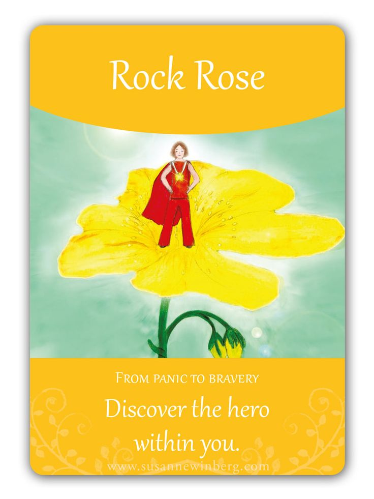 Rock Rose - Bach Flower Oracle Card by Susanne Winberg. Message: Discover the hero within you.