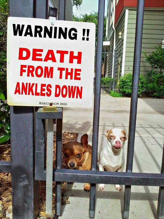You Have Been Warned, Proceed With Caution