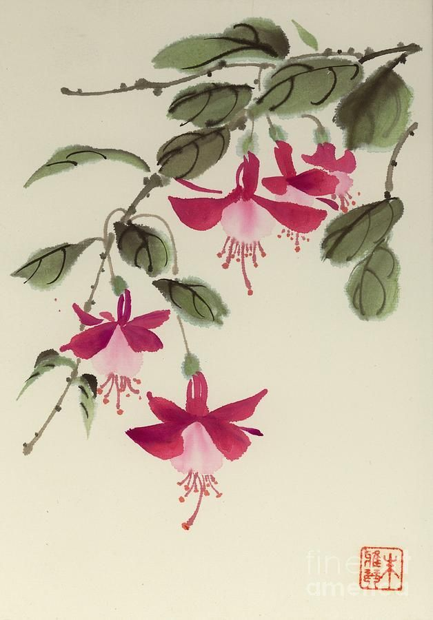Fuschia Flower Tattoo Google Search Flower Drawing Flower Painting Watercolor Flowers