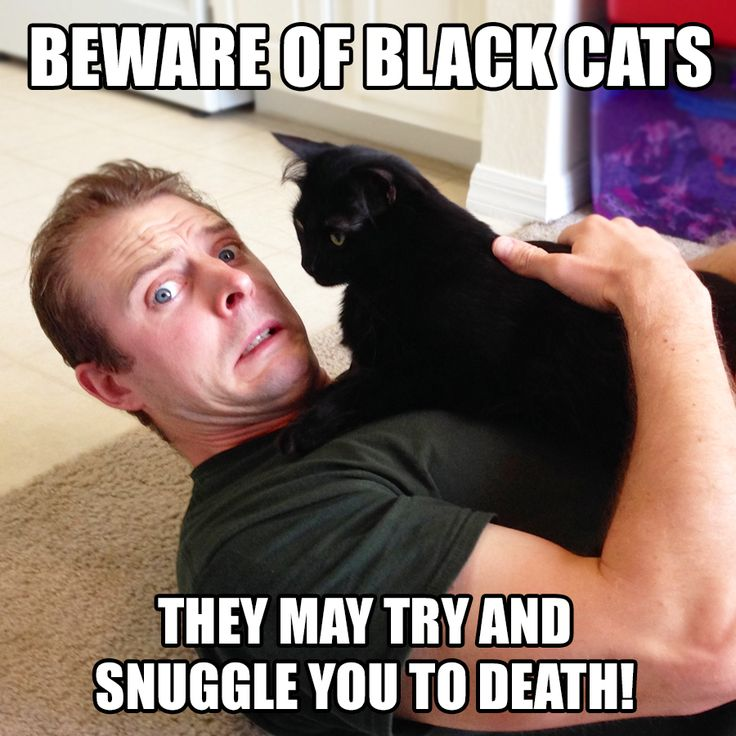 To Life that is!! They're so evil..NOT ;) coleandmarmalade.com Black cat, we adopted one! August 17th and the month of October it's an awareness month…