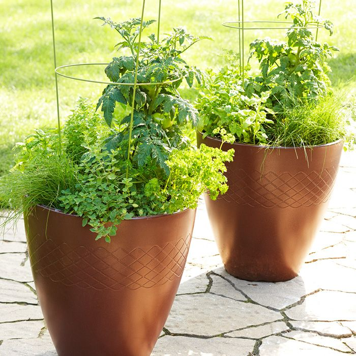 321 best gardening tips images on pinterest gardening for Indoor gardening meaning