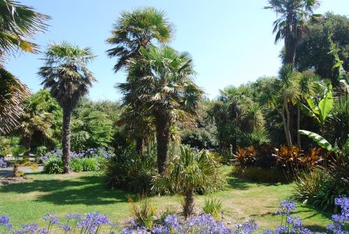 In the Botanic Gardens A picture of: Ventnor, Isle of Wight