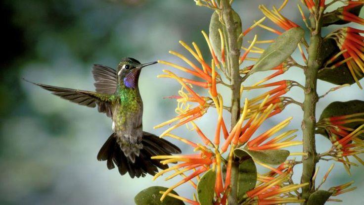 Humming Bird Exotic Flower