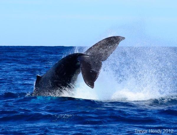 Whale of a Time - Trevor Hendy
