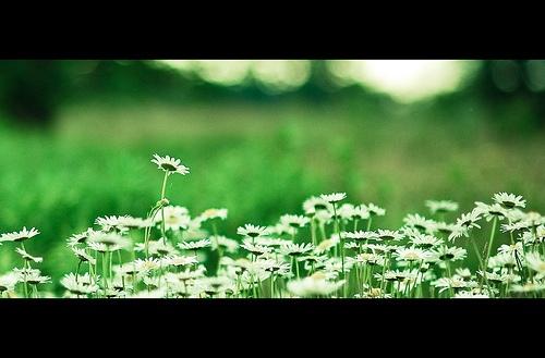 http://netzeroguide.com/solar-dancing-flower.html The most popular solar-powered moving flower. I prefer the sunflower solar-powered moving flower and also the bee solar dancing flowers the best. Dancing spirits