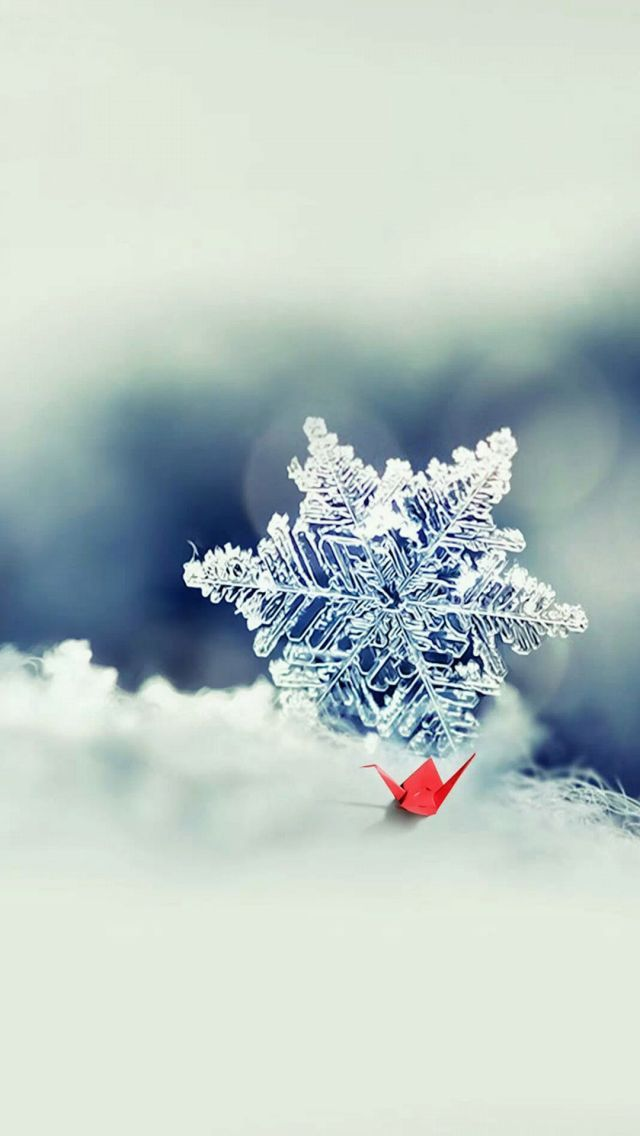 Snowflake in winter iPone 5 wallpaper , resolution is 640x1136