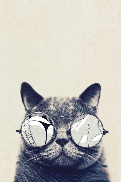 Poster - Gato Cool