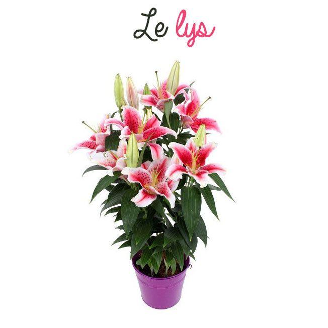 7 best Plantes images on Pinterest Plants, Blossoms and Jars