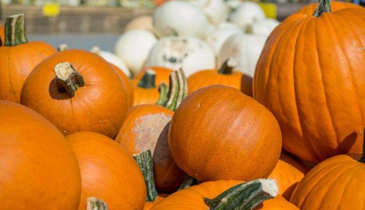 Great seasonal market in Klaistow!  #germany #brandenburg #visitgermany #germanysimplyinspiring #klaistow #beelitz #pumpkin #market
