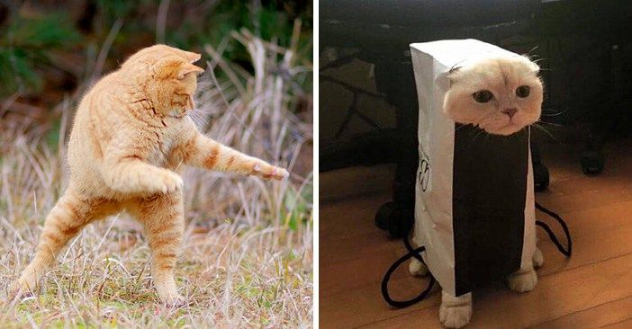 猫さん何やってるの!?