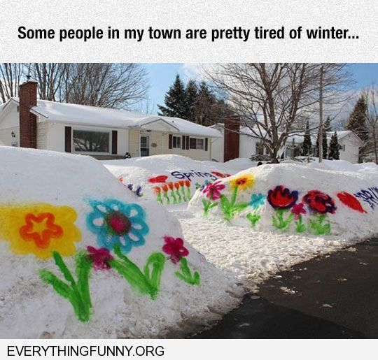 funny spray painted flowers on snow waiting for spring had ...