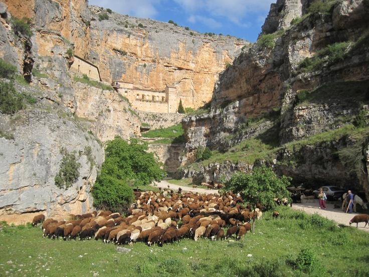 Rebaño de ovejas y Ermita de la Virgen de Jaraba.