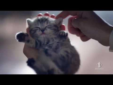 Whiskas pranzetti gatto spot 2016